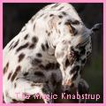 the magic knabstrup