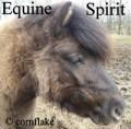 equine spirit