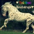 ♥ rainbow knabstrups ♥